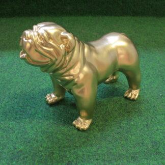 Gouden Engelse Bulldog